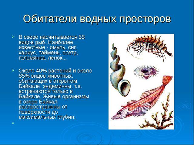 Обитатели водных просторов В озере насчитывается 58 видов рыб. Наиболее извес...