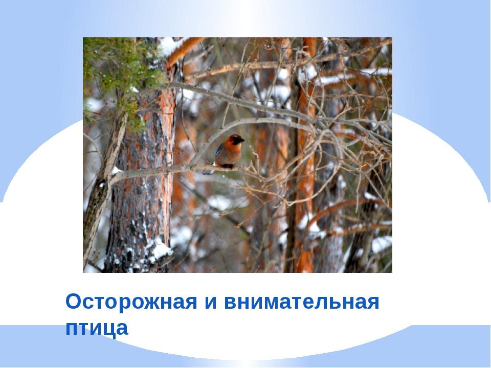 Осторожная и внимательная птица