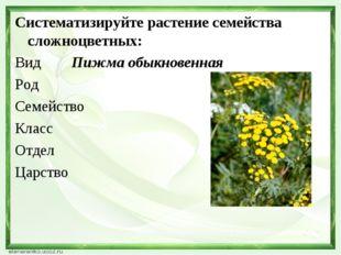 Систематизируйте растение семейства сложноцветных: Вид Пижма обыкновенная Род