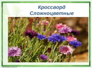 Кроссворд Сложноцветные