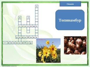 11 з111 е л е н ы е е а 5 4 р п е й н и к н и п о т м б у р 6 Топинамбур Ответ