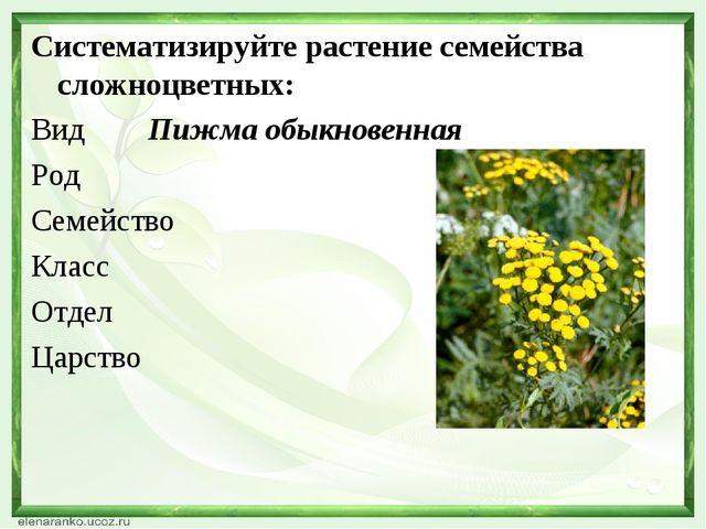 Систематизируйте растение семейства сложноцветных: Вид Пижма обыкновенная Род...