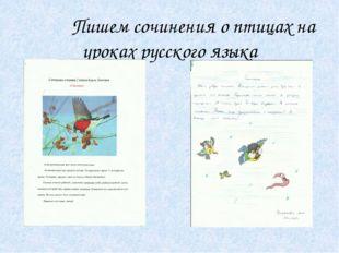 Пишем сочинения о птицах на уроках русского языка