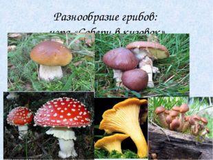 Разнообразие грибов: игра «Собери в кузовок»
