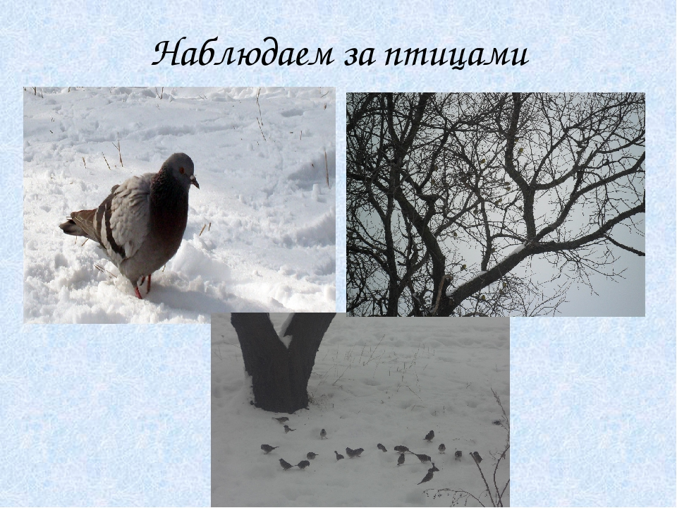 Наблюдаем за птицами
