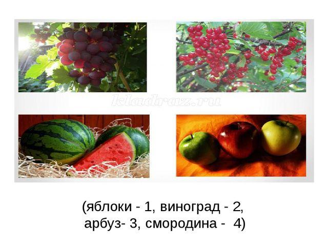 (яблоки - 1, виноград - 2, арбуз- 3, смородина - 4)