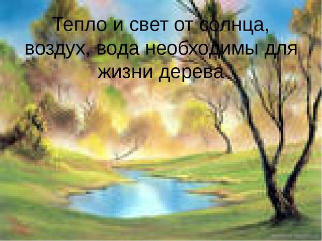 Тепло и свет от солнца, воздух, вода необходимы для жизни дерева