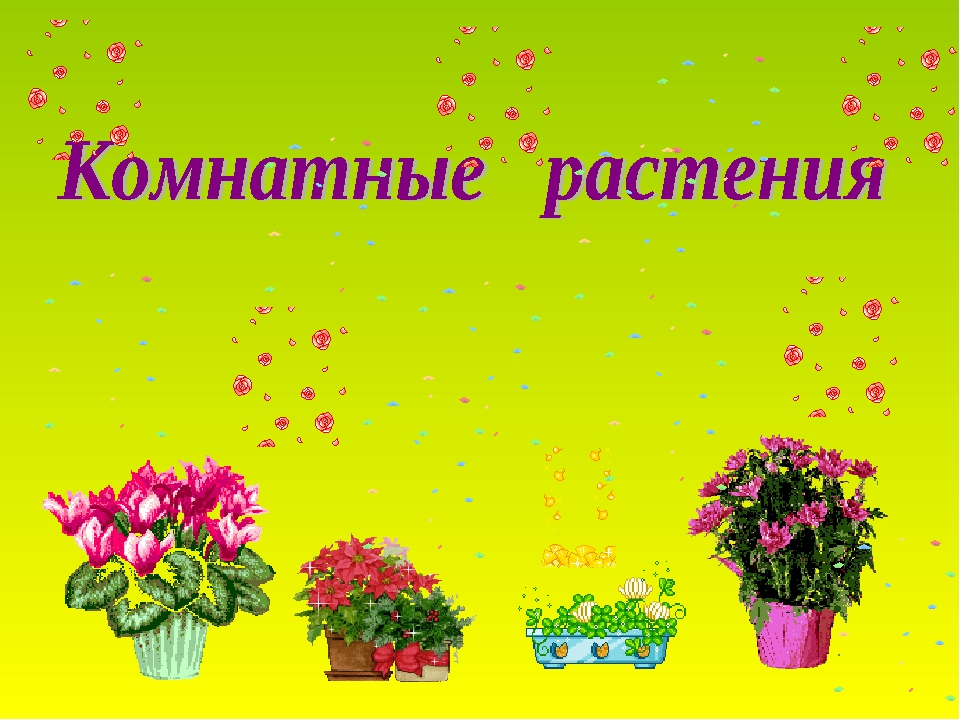 картинки комнатных растений в презентации этого состояния
