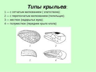 Типы крыльев: 1— с сетчатым жилкованием ( златоглазка); 2 — с перепончатым ж