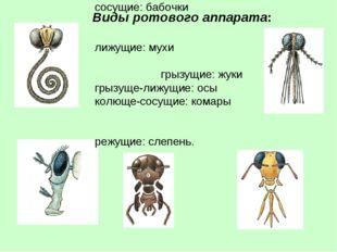 Виды ротового аппарата: сосущие: бабочки лижущие: мухи грызущие: жуки грызуще
