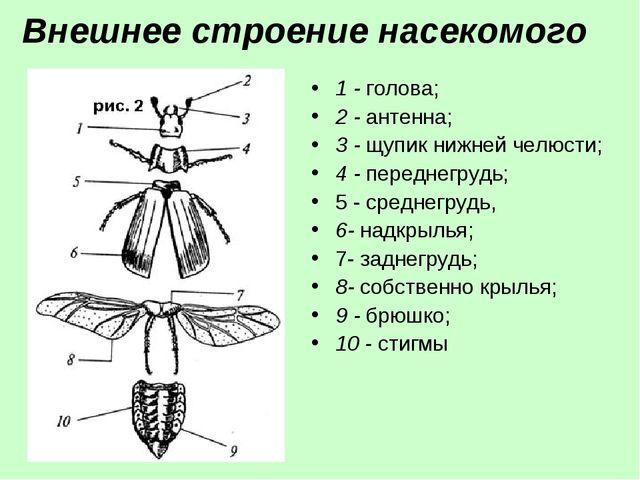 Внешнее строение насекомого 1 - голова; 2 - антенна; 3 - щупик нижней челюсти...