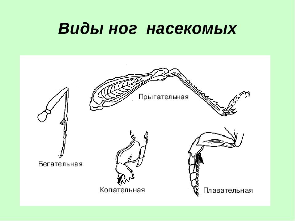 Виды ног насекомых