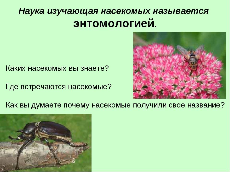 Наука изучающая насекомых называется энтомологией. Каких насекомых вы знаете...