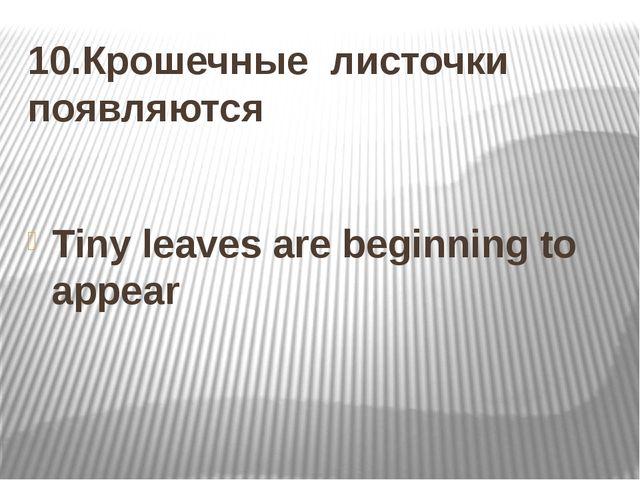 10.Крошечные листочки появляются Tiny leaves are beginning to appear