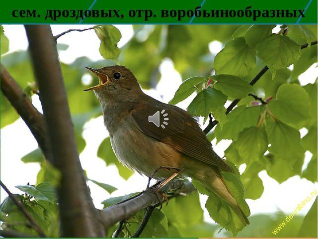 сем. дроздовых, отр. воробьинообразных