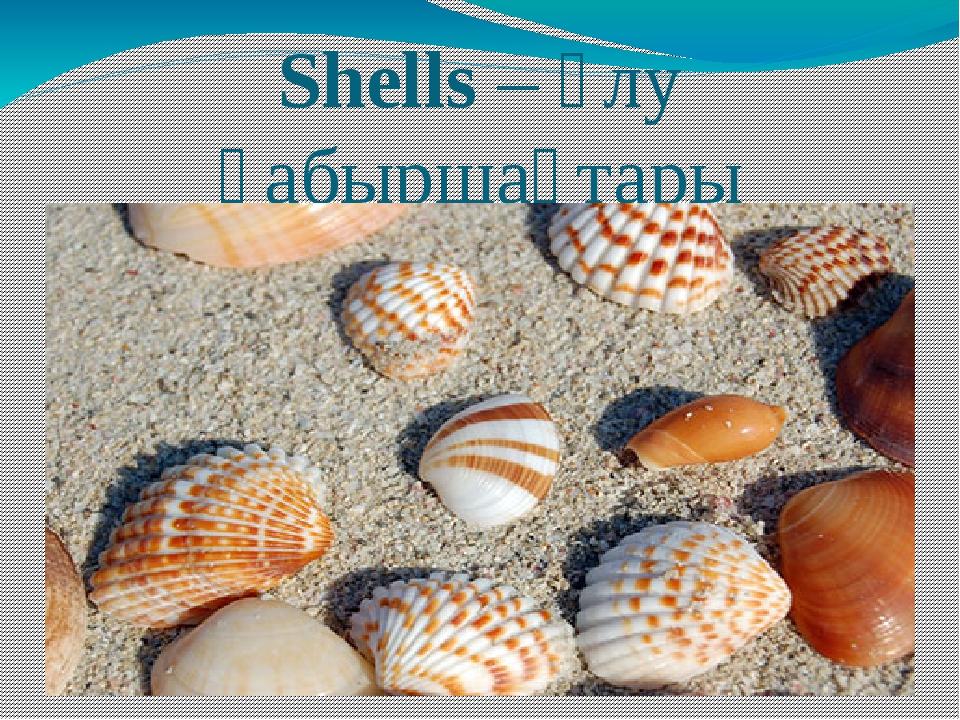 Shells – ұлу қабыршақтары
