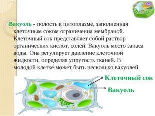 Вакуоль - полость в цитоплазме, заполненная клеточным соком ограниченна мембр