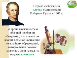 Первые изображения клетки были сделаны Робертом Гуком в 1665 г. Во время изуч