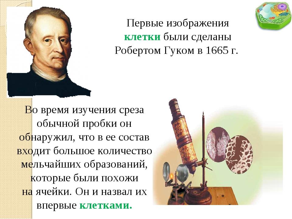Первые изображения клетки были сделаны Робертом Гуком в 1665 г. Во время изуч...