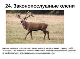 24. Законопослушные олени Ученые заметили, что олени из Чехии никогда не пере