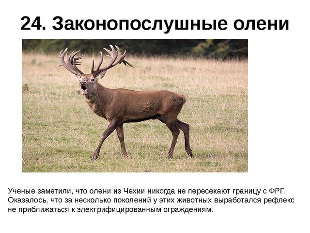 24. Законопослушные олени Ученые заметили, что олени из Чехии никогда не пере...