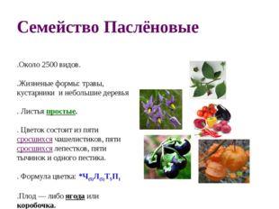 Семейство Паслёновые 1.Около 2500 видов. 2.Жизненые формы: травы, кустарники