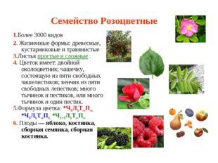 Семейство Розоцветные 1.Более 3000 видов 2. Жизненные формы: древесные, куста