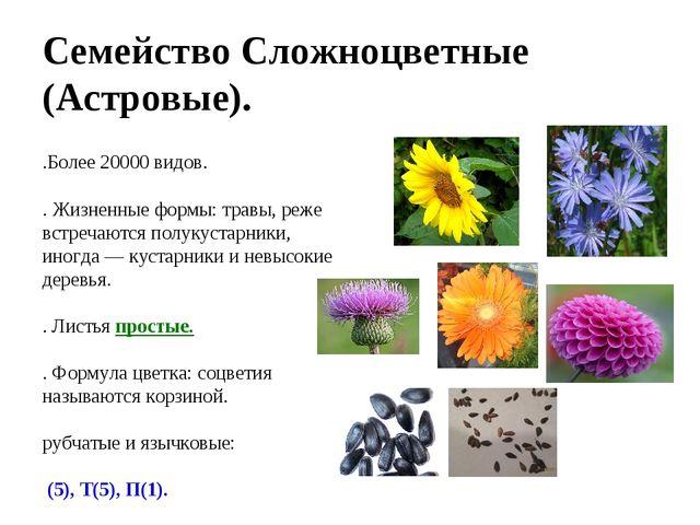 Семейство Сложноцветные (Астровые). 1.Более 20000 видов. 2. Жизненные формы:...