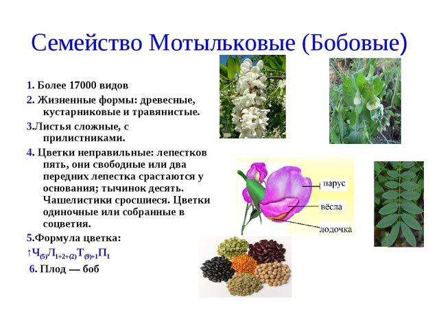 Семейство Мотыльковые (Бобовые) 1. Более 17000 видов 2. Жизненные формы: древ...