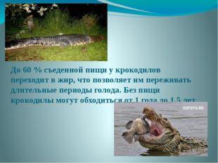 До 60 % съеденной пищи у крокодилов переходит в жир, что позволяет им пережив