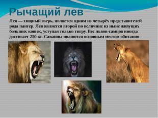 Рычащий лев Лев — хищный зверь, является одним из четырёх представителей рода
