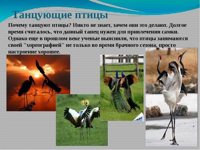 Танцующие птицы Почему танцуют птицы? Никто не знает, зачем они это делают. Д...