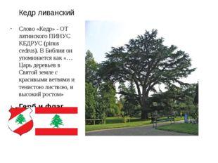Кедр ливанский Слово «Кедр» - ОТ латинского ПИНУС КЕДРУС (pinus cedrus). В Би