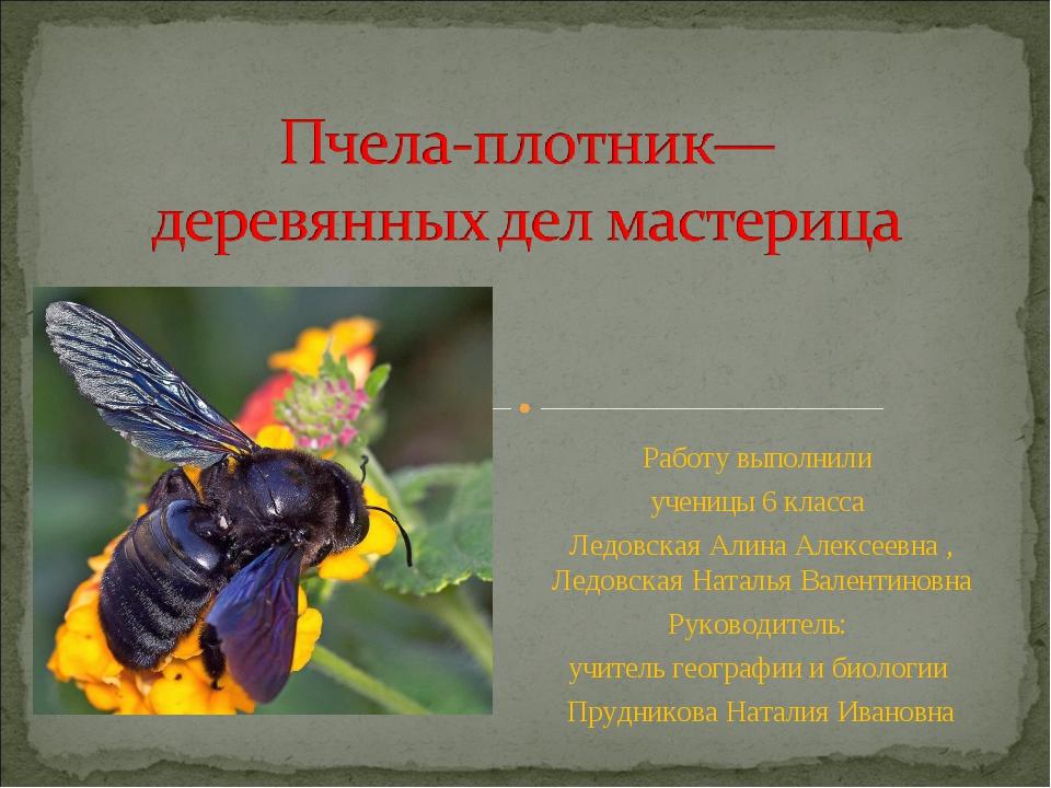 Работу выполнили ученицы 6 класса Ледовская Алина Алексеевна , Ледовская Ната...