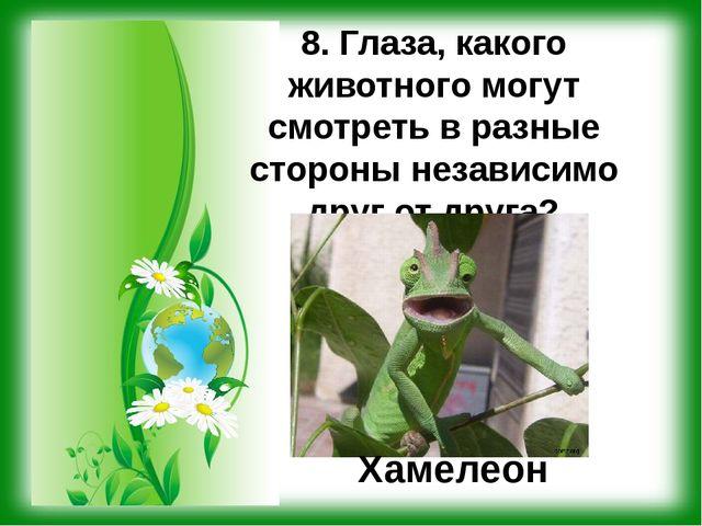 8. Глаза, какого животного могут смотреть в разные стороны независимо друг от...