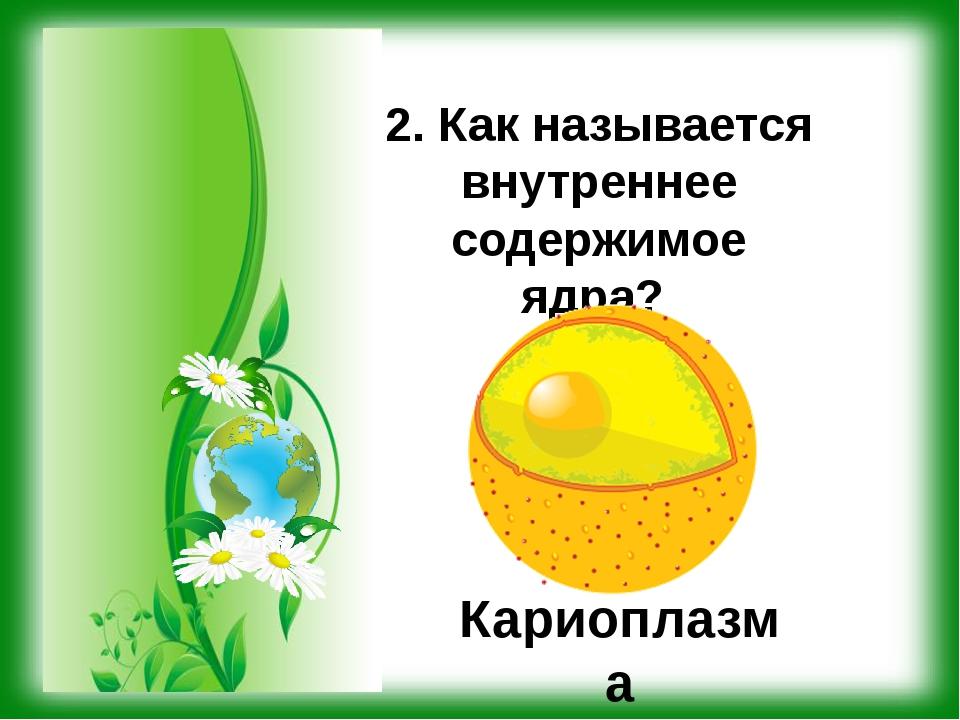 2. Как называется внутреннее содержимое ядра? Кариоплазма