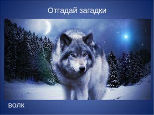 Отгадай загадки волк