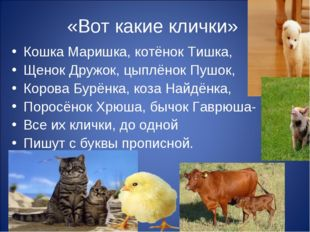 «Вот какие клички» Кошка Маришка, котёнок Тишка, Щенок Дружок, цыплёнок Пушок