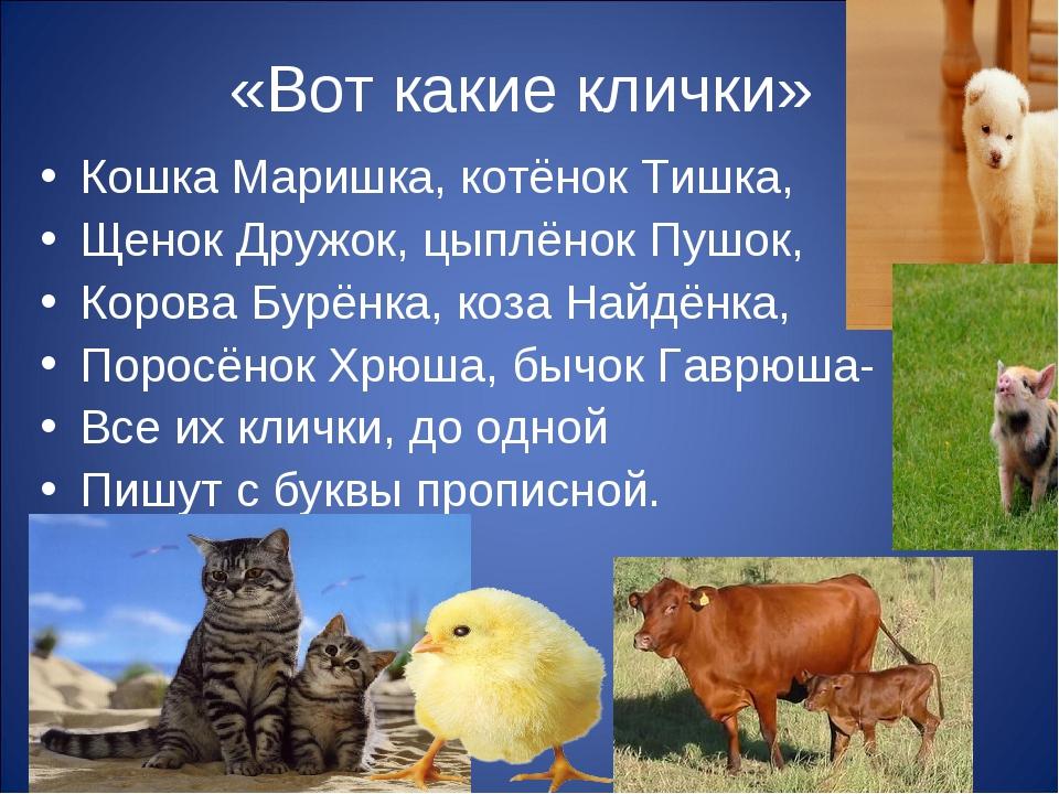 «Вот какие клички» Кошка Маришка, котёнок Тишка, Щенок Дружок, цыплёнок Пушок...