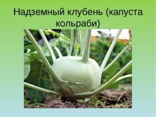 Надземный клубень (капуста кольраби)