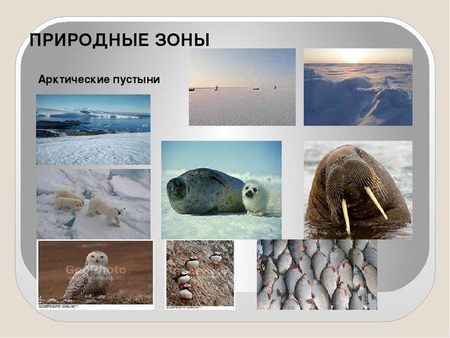 ПРИРОДНЫЕ ЗОНЫ Арктические пустыни