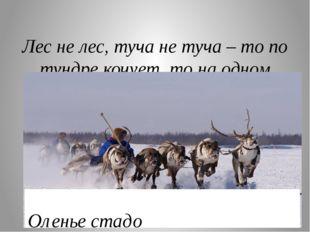 Лес не лес, туча не туча – то по тундре кочует, то на одном месте стоит? Оле