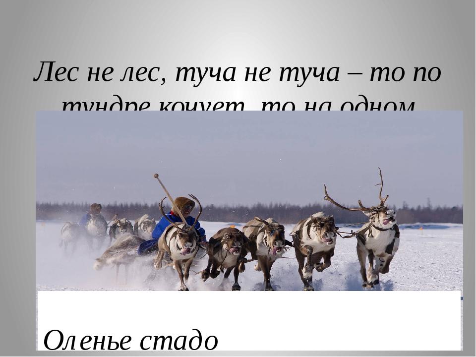 Лес не лес, туча не туча – то по тундре кочует, то на одном месте стоит? Оле...
