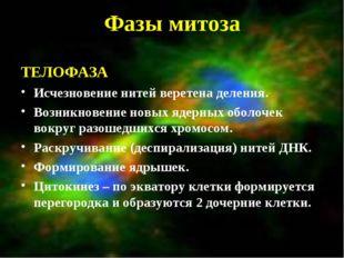 Фазы митоза ТЕЛОФАЗА Исчезновение нитей веретена деления. Возникновение новых