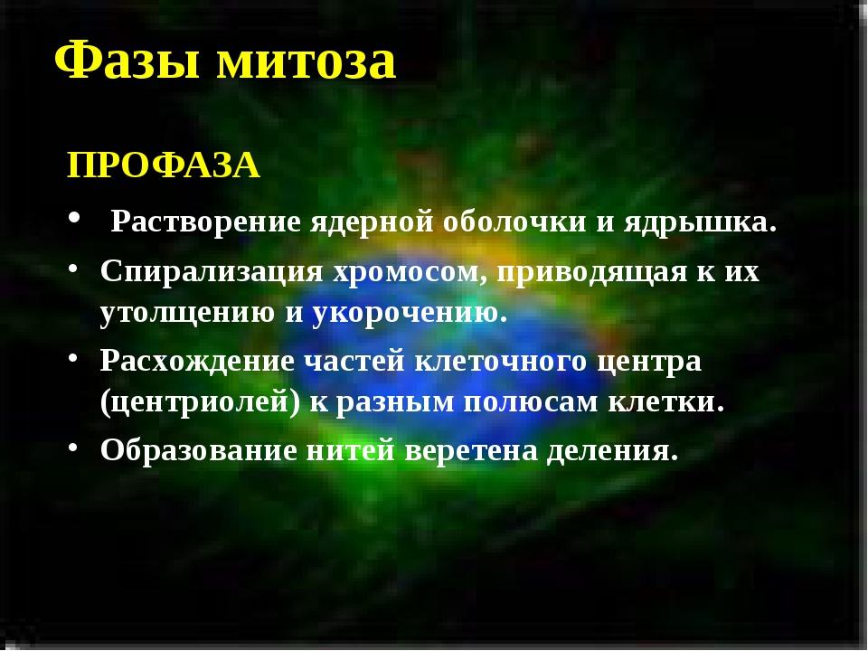 Фазы митоза ПРОФАЗА Растворение ядерной оболочки и ядрышка. Спирализация хром...