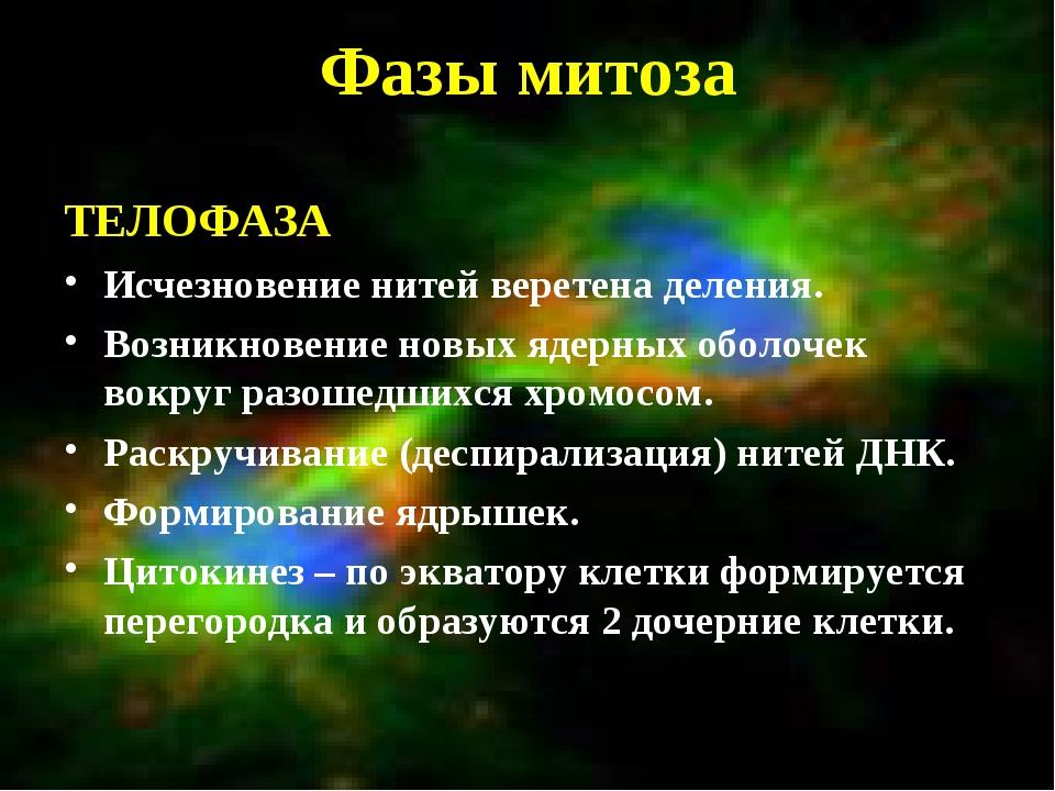 Фазы митоза ТЕЛОФАЗА Исчезновение нитей веретена деления. Возникновение новых...