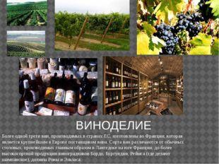ВИНОДЕЛИЕ Более одной трети вин, производимых в странах ЕС, изготовлены во Фр