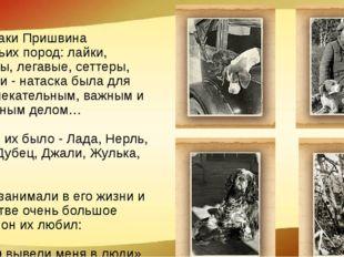 Все собаки Пришвина охотничьих пород: лайки, пойнтеры, легавые, сеттеры, спан
