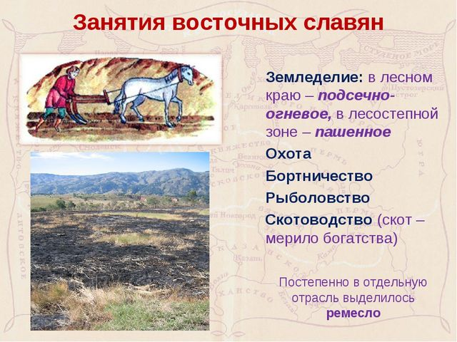 Занятия восточных славян Земледелие: в лесном краю – подсечно-огневое, в лес...