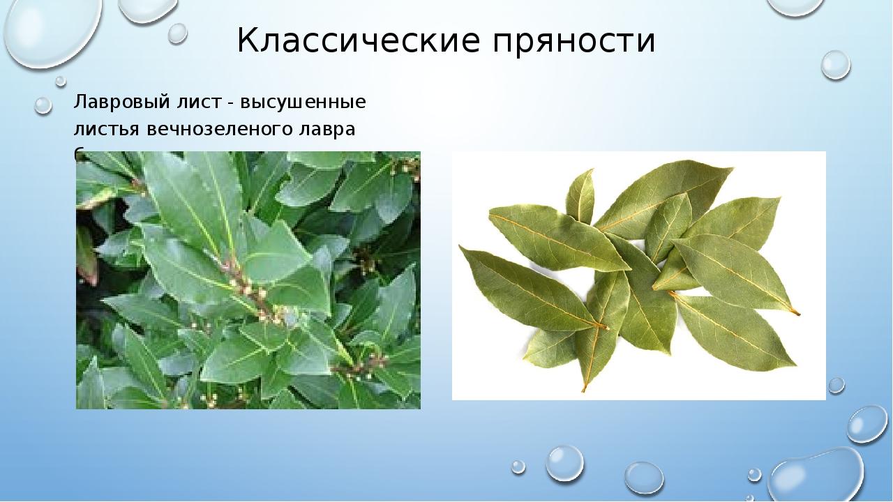 Классические пряности Лавровый лист - высушенные листья вечнозеленого лавра б...